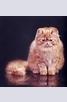 Книга - Малка книжка за котки