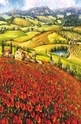 Poppies in Bloom - 1000