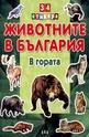 Животните в България: В гората