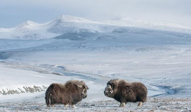 National Geographic - снимка 3 - брой 5 от 2013 г.