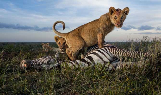 National Geographic - снимка 1 - брой 8 от 2013 г.